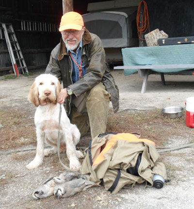 Eli, 4 month Spinone after first hunt
